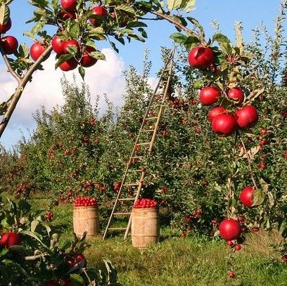 Obst(iges) vom Obsthof Kitt